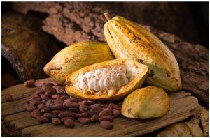 Ventajas del cacao para ganar masa muscular